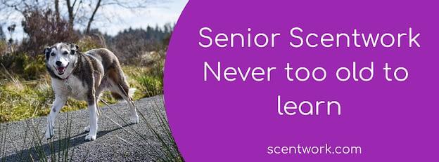 senior scentwork banner