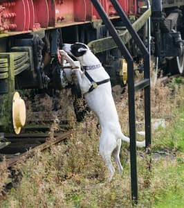 mixed breed searches train