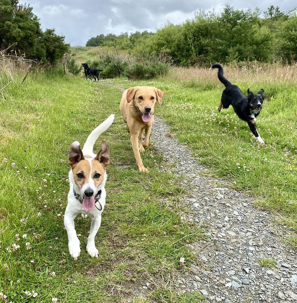 movement of three dogs