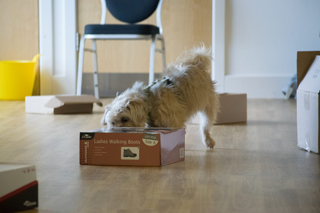 online courses will help your dog learn scentwork