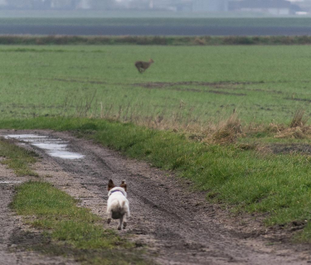 don't panic dog chasing deer