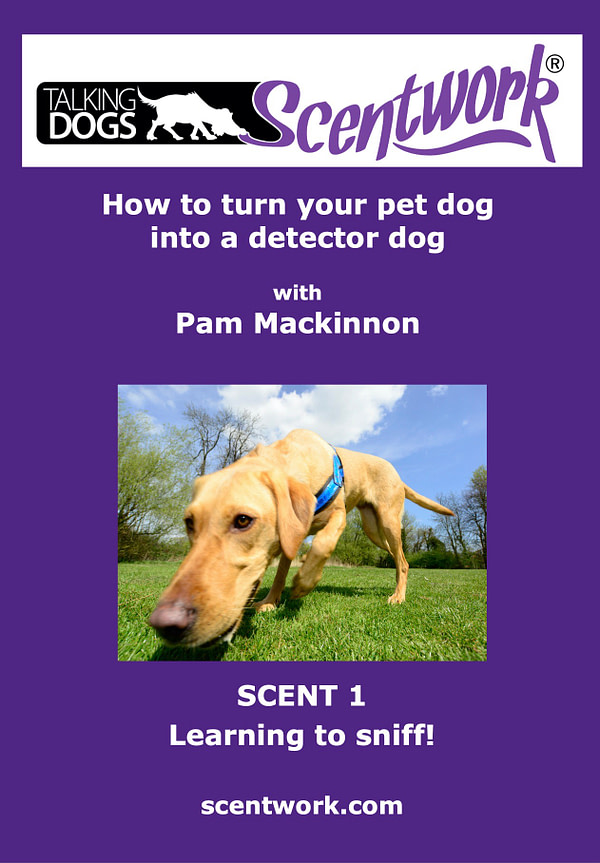 Scentwork dvd scent 1 learning to sniff
