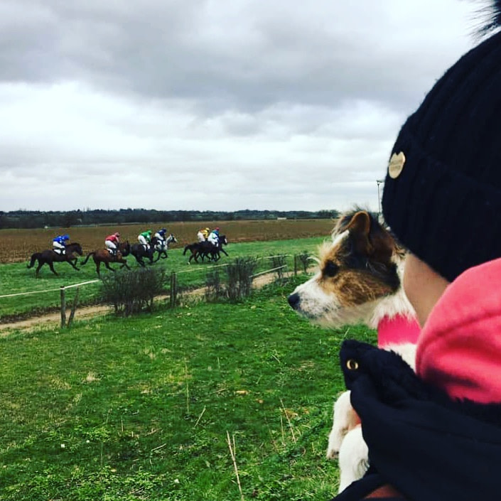 Scentwork terrier watches courses point
