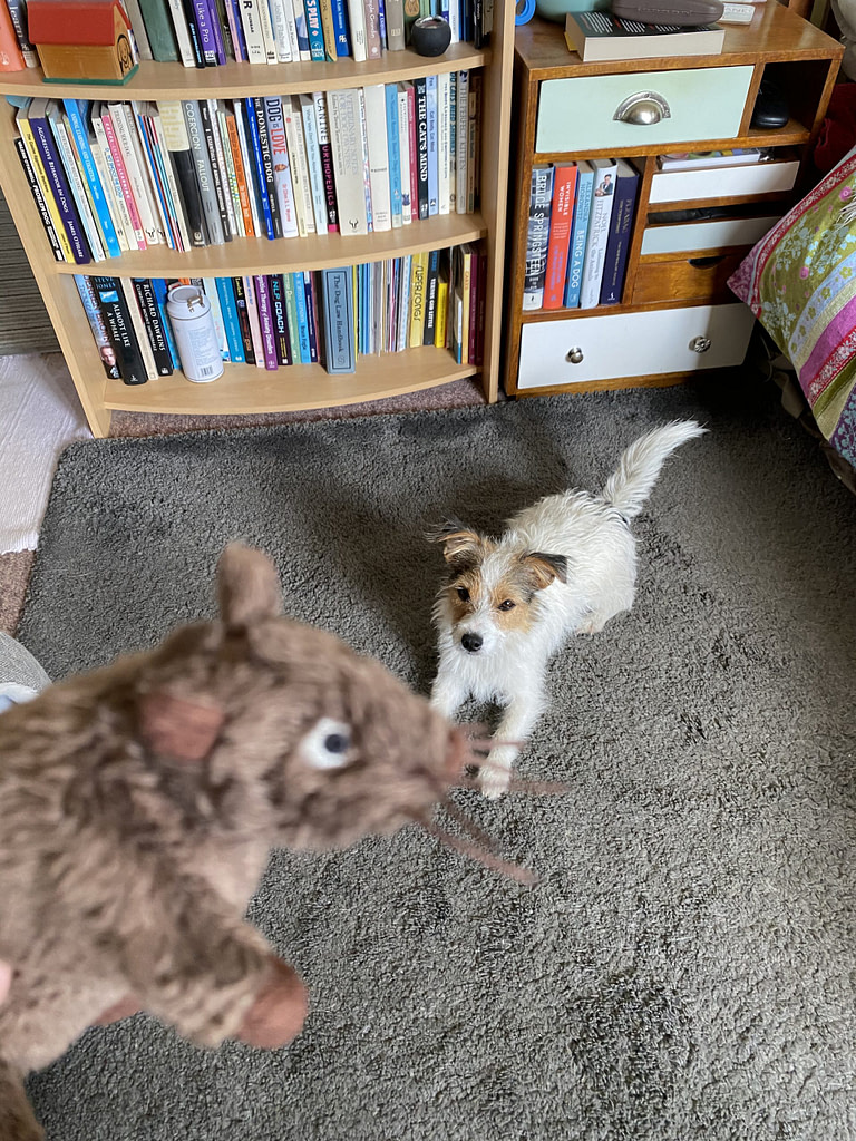 indoor search with Ettie and mouse
