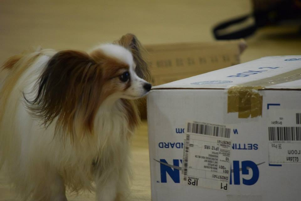 papillon searching box