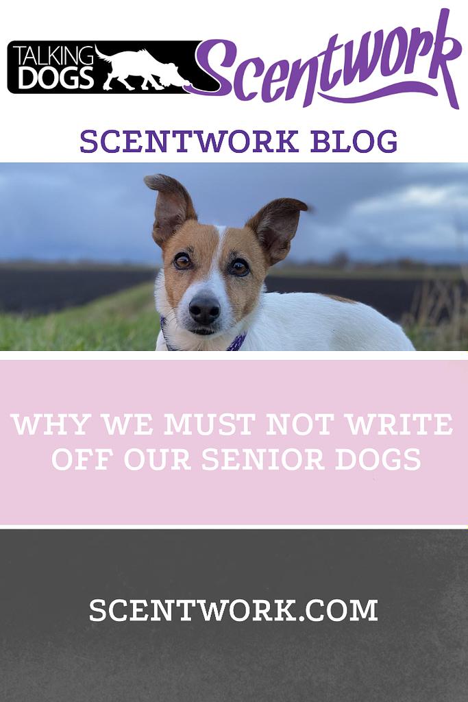 senior dogs blog pinterest