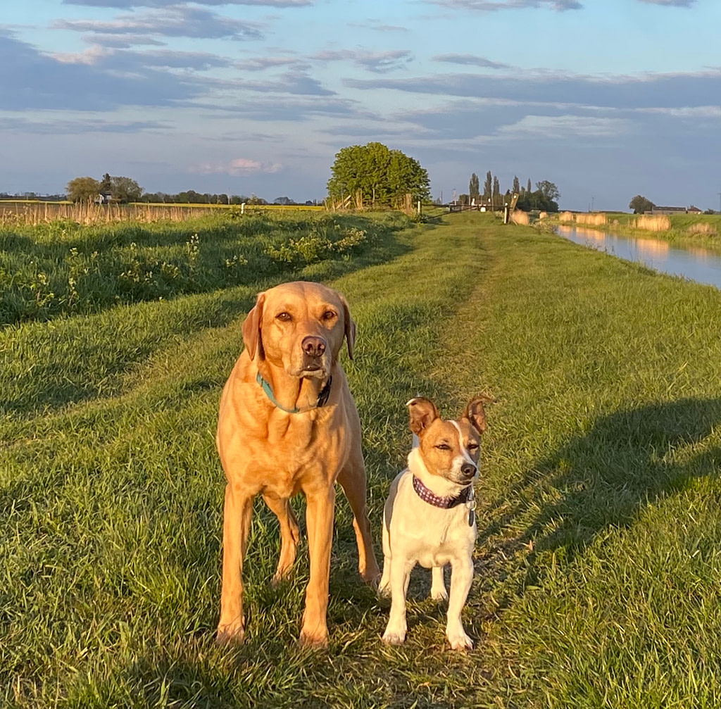 two dogs in the golden hour