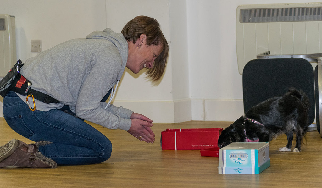 scentwork team happy owner delighted that her little chihuahua has located the scentwork article