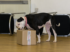 scentwork dog sbt sniffing box