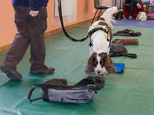 dog searching baggage
