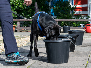 dog searching water bucket