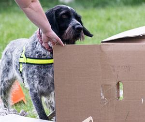 handler helping dog