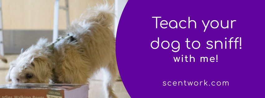 teach your dog to sniff