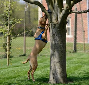 dog searching tree