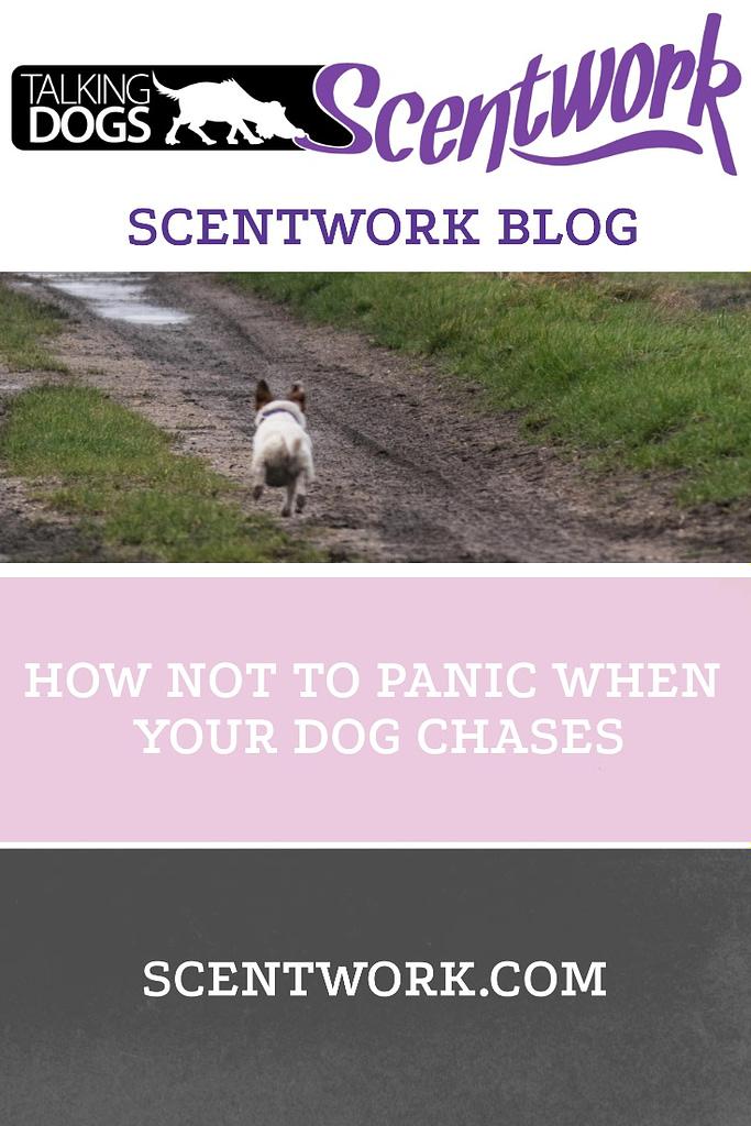 chase blog
