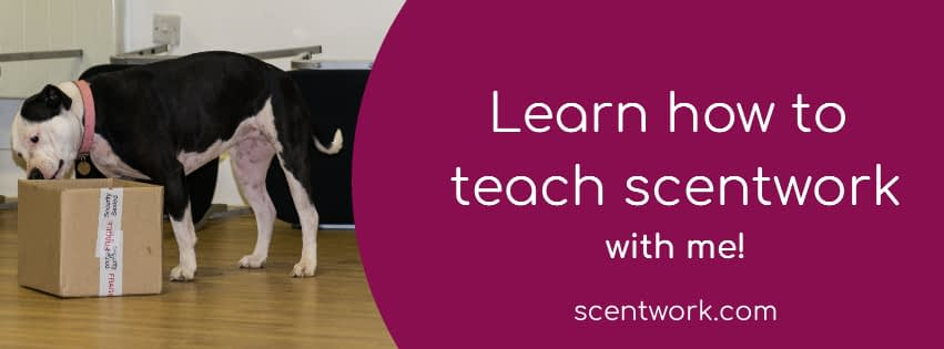 how to teach scentwork