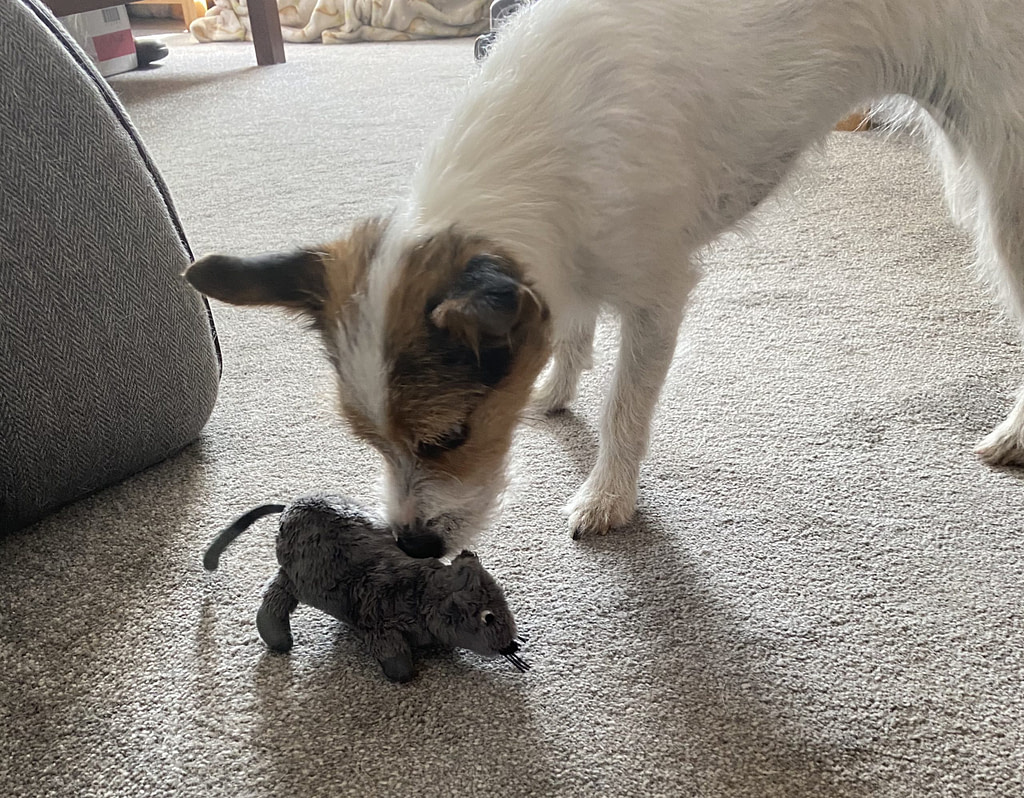 Ettie finds a mouse