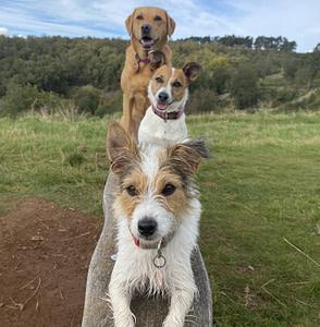 three skilled dogs