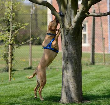 dog searching tree