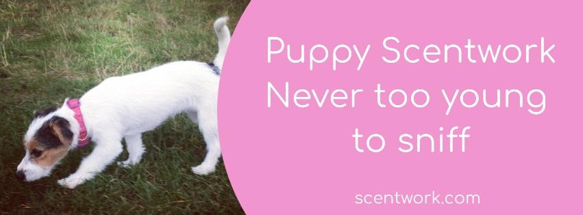 puppy scentwork