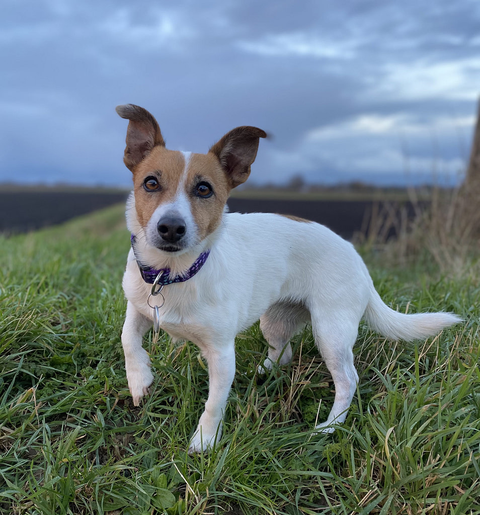 jrt Ella on her 7th birthday